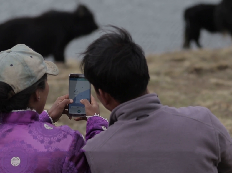 Connected Yaks in China give farmers a reason to celebrate thumbnail image