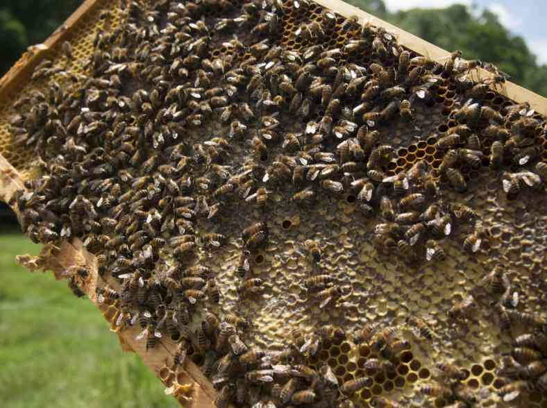 Connected hives; without the bees we all get stung thumbnail image