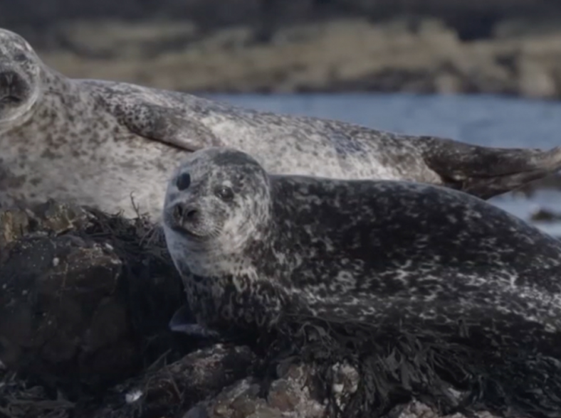 Saving our oceans starts with seals thumbnail image
